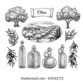 Olive set. Hand drawn vector illustration. Isolated on white background. Retro style.