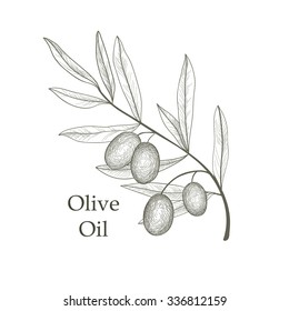 Olive tree branch with berries isolated. Vegetable garden background. Retro olive branch engraving vector illustration