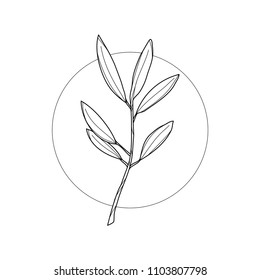Olive tree branch in geometric background. Simple icon composition. Vector illustration. Line work. Modern monochrome logotype. Nature representation.
