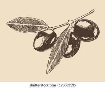 Olive tree branch vintage illustration, engraved retro style, hand drawn, sketch