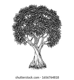 Olive tree, hand drawn vector illustration, symbol life and fertility. Isolated sketch, emblem environment, engraving on white background.