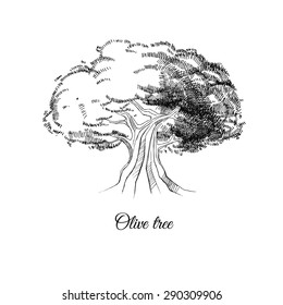 olive tree, hand drawn vector sketch, black and white image