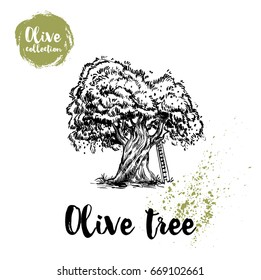 Olive tree with ladder hand drawn poster. Old looking vector artwork. Great for cosmetic creams designs, labels, flyers, farm fresh products.