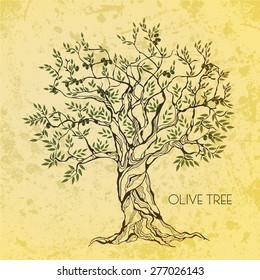 Olive tree on vintage paper. Olive oil
