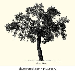 Olive Tree silhouette, vector