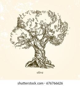 Olive tree. Vintage style. Vector illustration