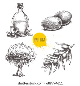 Olives fruits, branch, tree and olive oil bottle sketches set. Hand drawn vector illustrations isolated on white background.
