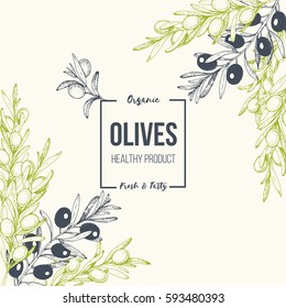 Olives hand drawn vector illustration. Healthy and organic food design template. Vintage style image.