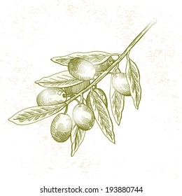 olives, vector hand drawing