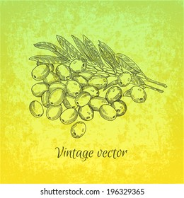 Olives, vector hand drawing label
