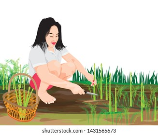 one agriculturist harvest asparagus in garden,vector design