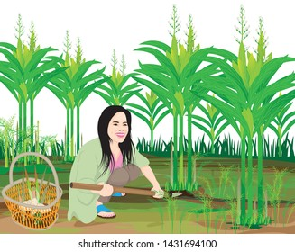 one agriculturist harvest galangal in garden,vector design