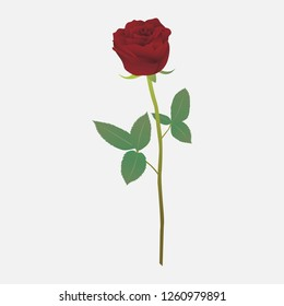 one beautiful red rose on a white background, vector background