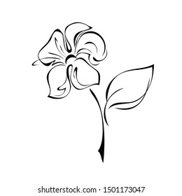 one blooming flower with large petals on a short stem with one leaf in black lines on a white background