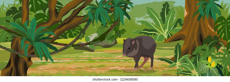 One collar peccary drinks in impassable jungle. A tropical forest. Rainforests of Amazonia. Tree, epiphytic ferns, creepers, banana trees and monsteras. Realistic Vector Landscape