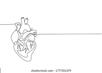 One continuous line drawing of anatomical human heart organ. Medical internal anatomy concept. Modern single line draw trendy design vector illustration