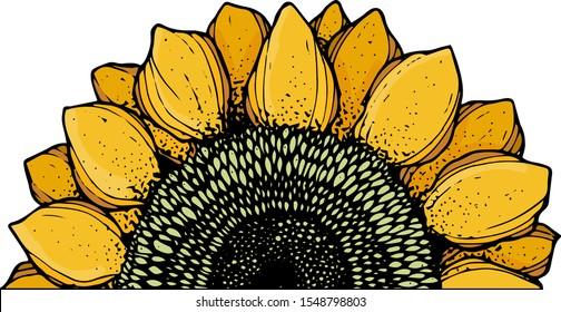 hand drawn sunflower clipart set design cuts