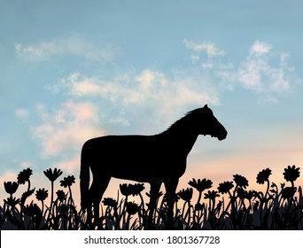 One horse stands on the lawn full of camomile flowers. Countryside meadow at sunset. Simple silhouette illustration under the realistic vector sky.