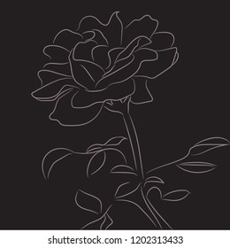 One single rose with sketch style line art design vector.