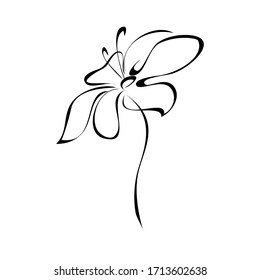one stylized blooming flower on a short stalk without leaves in black lines on a white background