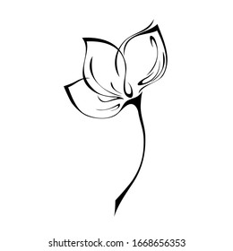 one stylized flower bud on a short stem without leaves in black lines on a white background