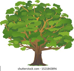 One wide massive old oak tree with green leaves isolated illustration, majestic oak with a rough trunk and big crown