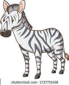 One zebra on white background illustration
