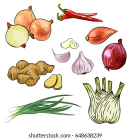 Onion, chilly, garlic, ginger, fennel vector illustration isolated on white background. Cartoon style illustration. Cooking spicy ingredient