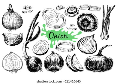 Onion hand drawn graphic set. Full, rings and Half cutout slice. Isolated Vegetable engraved style object. Detailed vegetarian food drawing.