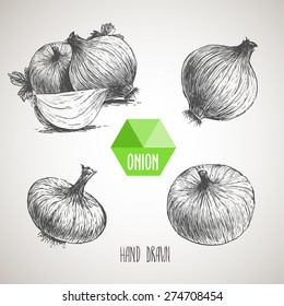 Onion hand drawn set. Herbs and spices vector illustration