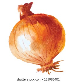 Onion. Hand drawn watercolor painting on white background, vector illustration.