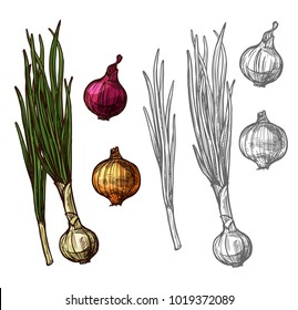 Onion vegetable with green leaf sketch of spicy plant. Yellow, red and white bulb onion, fresh sprout of spring onion or scallion, leek or shallot icon for farm market and food packaging design