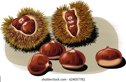 open chestnut curls, with a few scattered chestnuts.