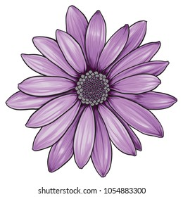 Open purple daisy vector flower.