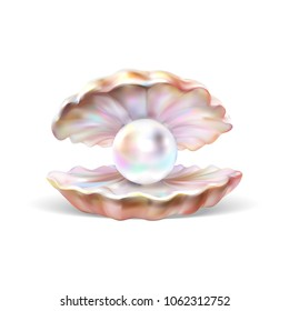 open shell with pearl illustration vector