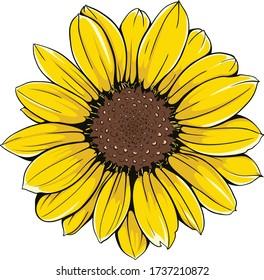 Open sunflower vector flower. Hand-drawn vector illustration.