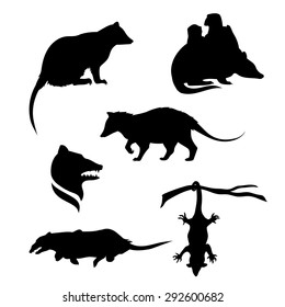 Opossum icons and silhouettes. Set of illustrations in different poses.