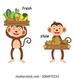 Opposite fresh and stale vector illustration
