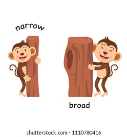 Opposite narrow and broad vector illustration