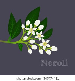 Orange blossom branch with flowers, buds and leaves. Floral composition with fleur d'orange. Neroli design on a dark background. Vector illustration for use in web design, print or other visual area.
