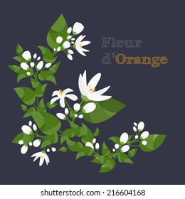 Orange blossom branches