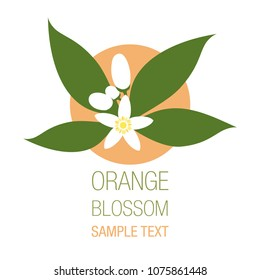 Orange blossom flowers with buds and leaves isolated on white background