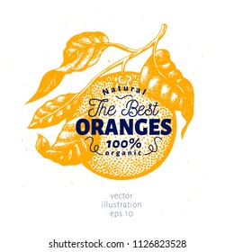 Orange branch illustration. Hand drawn vector fruit illustration. Engraved style. Vintage citrus illustration.