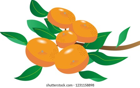 orange and branch and leaves