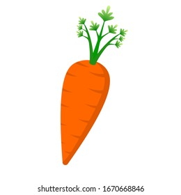 Orange carrot with green leaves on a white background.