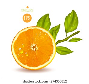 Orange cut in half. Citrus isolated on white background beautiful fresh fruit. Vector realistic art illustration for advertising packaging carton bottle banner wallpaper. Color yellow green. Colorful