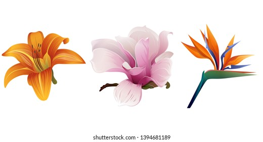 Orange Daylily. Pink Magnolia. Orange Strelitzia reginae. Vector illustration. Floral botanical flower. Wild leaf wildflower isolated. Exotic tropical hawaiian jungle. Isolated illustration element.