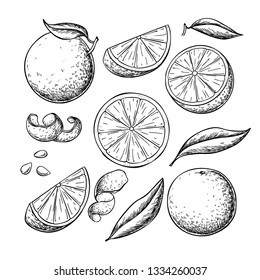 Orange fruit vector drawing set. Summer food engraved  illustration. Isolated hand drawn slice, whole and half orange, peel , leaves. Botanical sketch of citrus for label, juice packaging