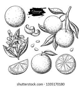 Orange fruit vector drawing. Summer food engraved  illustration Isolated hand drawn slice, whole and half orange, branch, blooming flower, leaves. Botanical sketch of citrus for label, juice packaging