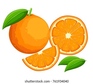 Orange with leaves whole and slices of oranges. Vector illustration of oranges. Vector illustration for decorative poster, emblem natural product, farmers market. Website page and mobile app design